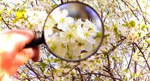 Fiori bianchi sotto la lente d'ingrandimento Immagini Stock Libere da Diritti