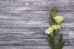Fiori bianchi su un fondo di legno grigio Giorno del biglietto di S nozze Cartolina d'auguri Fotografia Stock Libera da Diritti
