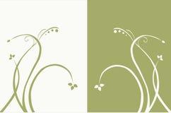 Fiori bianchi su una priorità bassa verde Fotografia Stock