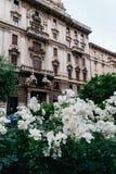 Fiori bianchi sulla priorità alta di architettura di Art Nouveau nel distretto del ` s Porta Venezia di Milano, Lombardia, Italia Fotografia Stock