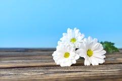 Fiori bianchi sulla tavola di legno, fondo blu-chiaro Fotografie Stock Libere da Diritti
