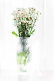 Fiori bianchi in un vaso Immagini Stock Libere da Diritti