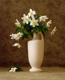 Fiori bianchi in vaso Fotografia Stock