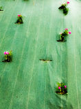 fiori bloccati in una tela cerata fotografia stock libera da diritti