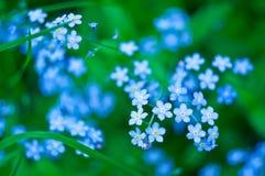 Fiori blu Fotografia Stock Libera da Diritti