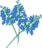Fiori blu Fotografie Stock