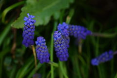 Fiori blu Fotografia Stock
