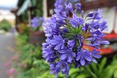 Fiori blu Fotografie Stock Libere da Diritti