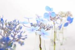 Fiori blu in bottiglie di vetro trasparenti Fotografia Stock Libera da Diritti