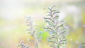 Fiori blu del bello prato su fondo soleggiato archivi video