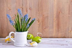 Fiori blu del muscari Fotografia Stock