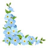 Fiori blu del nontiscordardime Fondo d'angolo di vettore illustrazione vettoriale