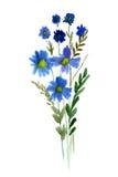 Fiori blu dell'acquerello Immagine Stock
