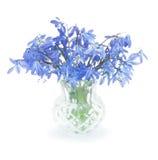 Fiori blu della prima sorgente in un piccolo vaso Fotografia Stock