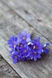 Fiori blu della sorgente sulla tabella di legno Fotografie Stock Libere da Diritti