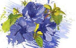 Fiori blu estratti Immagini Stock Libere da Diritti