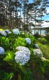 Fiori blu nella priorità alta in un giardino boscoso nel lago Immagine Stock Libera da Diritti