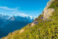 Fiori blu piacevoli contro il contesto di Mont Blanc nel Fren Fotografie Stock