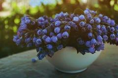 Fiori blu in un vaso Fotografia Stock Libera da Diritti