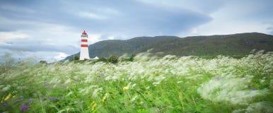 Fiori in brezza e faro di estate Fotografie Stock Libere da Diritti