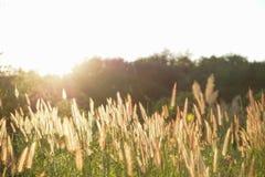 Fiori in campagna con luce solare fotografie stock libere da diritti