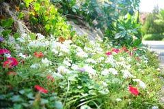 Fiori chiazzati che rimuovono radura, rosso, bianco fotografia stock