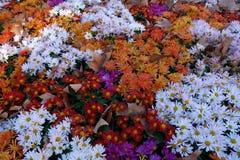 Fiori colorati Fotografie Stock