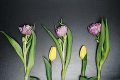 Fiori colorati su un fondo nero L'ottavo marzo, Fotografia Stock
