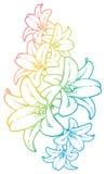 Fiori Colourful royalty illustrazione gratis