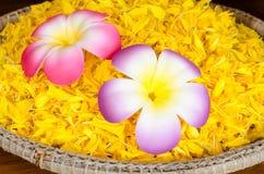 Fiori Colourful immagini stock