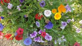 Fiori Colourful Immagine Stock Libera da Diritti
