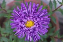 Fiori Colourful fotografie stock libere da diritti