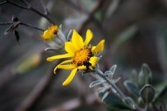 Fiori Colourful della margherita in giardino immagine stock