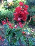 Fiori Colourful nel giardino Fotografia Stock Libera da Diritti