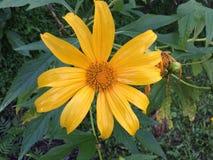 Fiori Colourful nel giardino Fotografie Stock