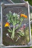 Fiori commestibili freschi dal giardino Fotografie Stock Libere da Diritti