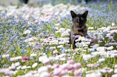Fiori con il gatto Immagini Stock Libere da Diritti