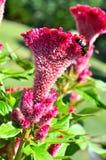Fiori con l'ape. Fotografia Stock