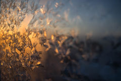 Fiori congelati immagini stock