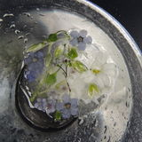 Fiori congelati in un vaso di vetro con le gocce di acqua su un fondo nero Fotografia Stock