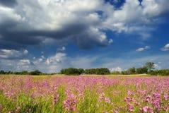 Fiori contro il cielo blu/prato di estate Fotografia Stock