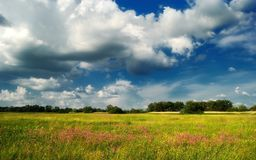 Fiori contro il cielo blu/prato di estate Fotografia Stock Libera da Diritti
