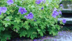 Fiori crescenti frantumati Il movimento della macchina fotografica permette di vedere il fiore da tutti i lati del fiore video d archivio