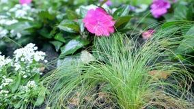 Fiori crescenti frantumati Il movimento della macchina fotografica permette di vedere il fiore da tutti i lati del fiore stock footage