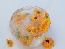 Fiori curativi del tagete in un'acqua di vetro archivi video
