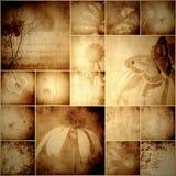 Fiori d'annata e farfalla del collage Immagine Stock
