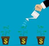 Fiori d'innaffiatura dei soldi Immagine Stock