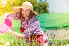 Fiori d'innaffiatura della donna in giardino Immagine Stock