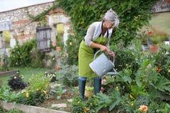 Fiori d'innaffiatura della donna matura in giardino Fotografia Stock