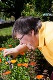 Fiori da taglio della donna invalida nel giardino Fotografia Stock